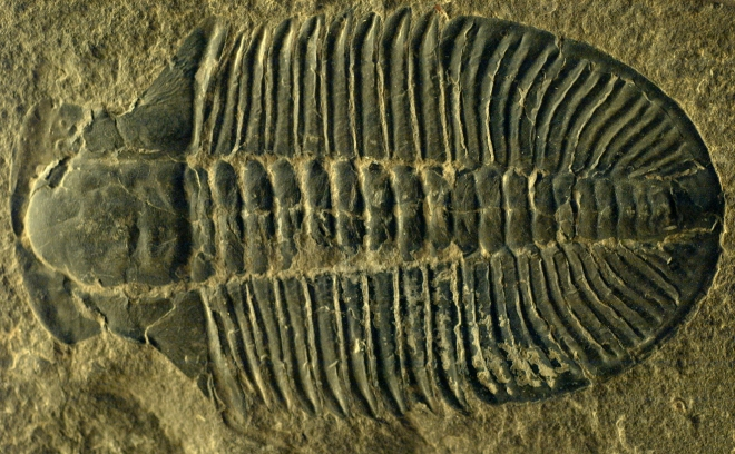 fossil_fossils_cambrian_327288_o